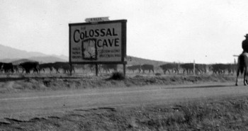 19 Cattle graze on open range along highway 80 and Colossal Cave Road (1935). Photo courtesy of VSP.